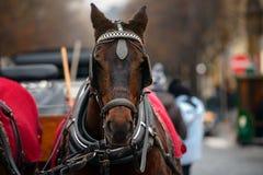 Dreamy Christmas horse Stock Photography