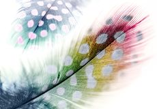 Dreamy colorful feathers composition. With gradient royalty free stock photography