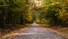 Country road in the forest, alley of trees with country road royalty free stock photos