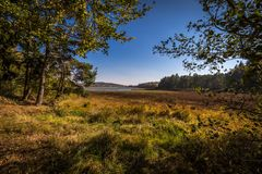 Dreamy edge of empty lake with high grass and colorful trees, clear deep blue sky Autumn in Czech Moravian highlands royalty free stock photo