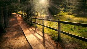 Welcoming path. Dreamy enchanting path in the forest with a bench in the distance and welcoming beams of light shining Royalty Free Stock Images