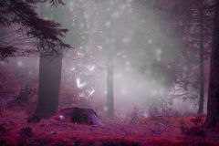 Dreamy fairytale forest scene with magic fireflies, foggy surreal forest stock image