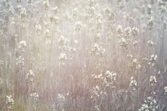 Dreamy floral background Stock Image