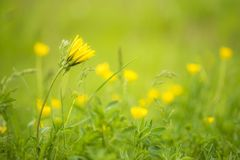 Dreamy flower meadow. As a background Royalty Free Stock Photos