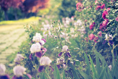 Dreamy flower path Royalty Free Stock Photography