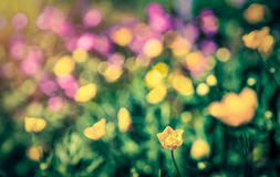 Dreamy flowers bokeh with lens flare Stock Photo