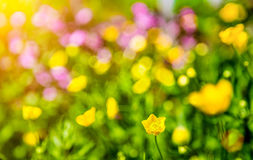 Dreamy flowers bokeh with lens flare Royalty Free Stock Images