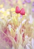 Dreamy flowers Royalty Free Stock Photo