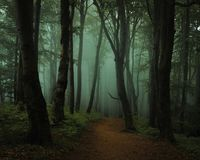 Dreamy foggy dark forest. Trail in moody forest royalty free stock images