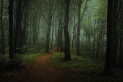 Dreamy foggy dark forest. Trail in moody forest royalty free stock image