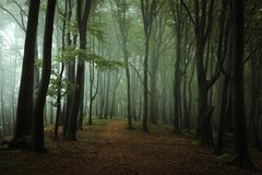 Dreamy foggy dark forest. Trail in moody forest royalty free stock photo