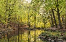 Dreamy foorest landscape Stock Image