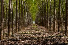 Dreamy forest avenue, wild forest royalty free stock photography