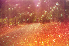 Dreamy forest bokeh background Royalty Free Stock Photography