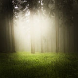 Dreamy forest Royalty Free Stock Photo