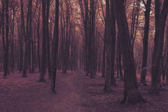 Dreamy forest. Dark scary forest like a fairy tale Royalty Free Stock Photography