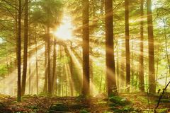 Dreamy forest light Stock Images