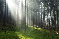 Dreamy forest light Stock Photography