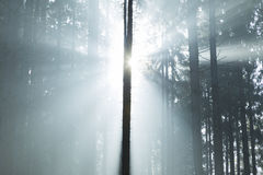 Dreamy forest light Royalty Free Stock Photos