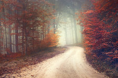 Dreamy forest road Stock Images