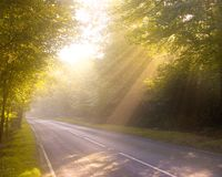 Dreamy forest road. Dawn or Dusk. Sunbeams filtering through the trees onto a narrow forest road Stock Photo