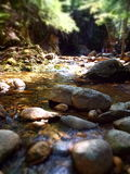 Dreamy forest scene with slow moving mountain stream. Soft focus miniature effect of babbling brook in woods with dappled sunlight shining through the trees in Stock Photo