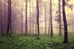 Dreamy forest trees Stock Image