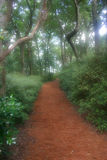 Dreamy Garden Path. Inviting dreamy garden path leads back into the unknown Stock Photos