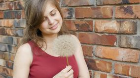 Dreamy girl with fluffy big dandelion on the background of the red brick wall, beautiful young woman smilng and flirting, female e. Motions, positive mood stock video