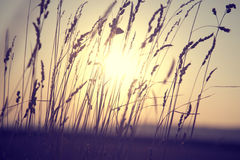 Dreamy golden color blurry countryside meadow at sunset Royalty Free Stock Image