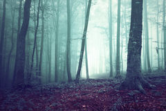 Dreamy green and blue colored foggy forest tree. Background. Fantasy colored woodland. Color filter effect used Stock Image