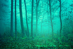 Dreamy green color forest Stock Image