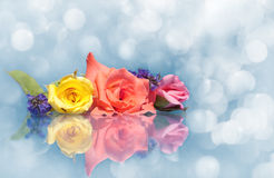 Dreamy image of beautiful roses on blue Stock Photos