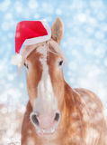 Dreamy image of a Belgian draft horse wearing a Santa hat Royalty Free Stock Photos