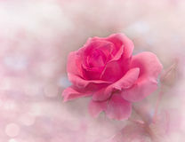Dreamy image of a glowing pink rose stock photography