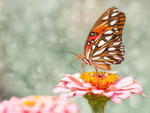 Dreamy image of a Gulf Fritillary Butterfly Stock Image