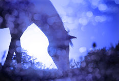 Dreamy image of a horse grazing against s Stock Photography