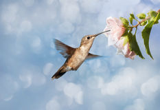 Dreamy image of a Hummingbird Stock Image