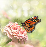 Dreamy image of a Monarch butterfly Stock Image