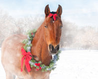 Dreamy image of a red bay horse wearing a Christmas wreath. And a bow royalty free stock image