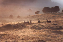 Dreamy landscape with wild deers Stock Images
