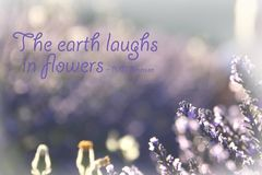 Earth Laughs in Flowers royalty free stock images