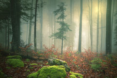 Dreamy light in foggy forest with sun Stock Images