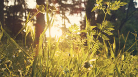 Dreamy light on the meadow Royalty Free Stock Photography