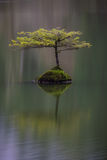 Dreamy. Lonely Tree at Fairy Lake near Port Renfrew, BC, Vancouver Island, Canada. Calm and peaceful scene Royalty Free Stock Image