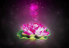 Dreamy lotus flower Royalty Free Stock Photos