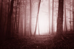 Dreamy marsala color foggy forest tree Stock Photo