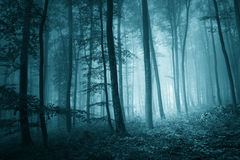 Dreamy mystic blue color foggy forest Royalty Free Stock Photography