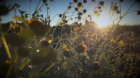 Dreamy nature desert sunrise stock video