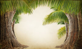Dreamy palm tree landscape backgrund Stock Images